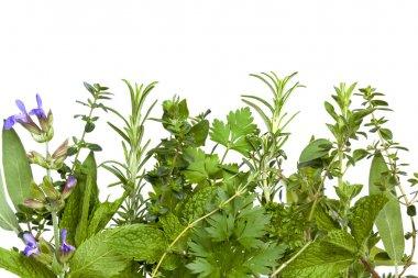 Herb Border over White