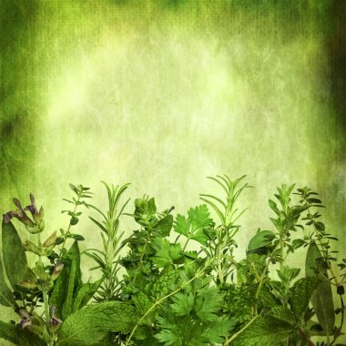 Herbal Background with Grunge Effects