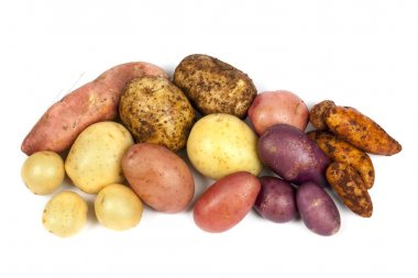 Potato Varieties Isolated on White
