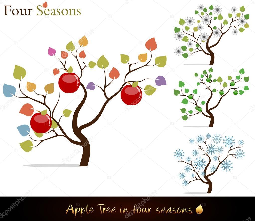 Apple tree four seasons