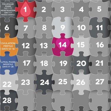 Female menstrual calendar