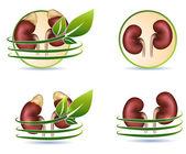 Fotografie Velká kolekce lidské ledviny zdravotní péče symbolů