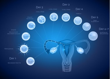 Embryo development abstract blue background