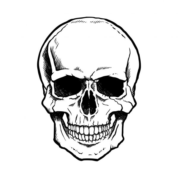 skull vector stock vectors royalty free skull vector illustrations rh depositphotos com skull vector free skull vector graphic