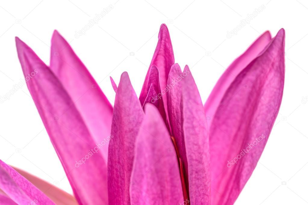 Lotus flower abstract stock photo akulamatiau 31878811 lotus flower abstract stock photo mightylinksfo