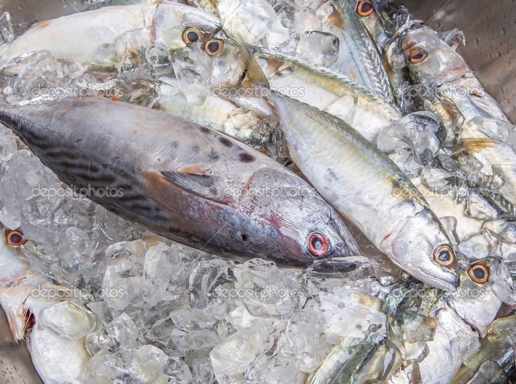 тунец и скумбрия