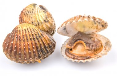 Raw Cockle