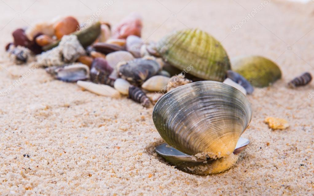 how to find clams on the beach