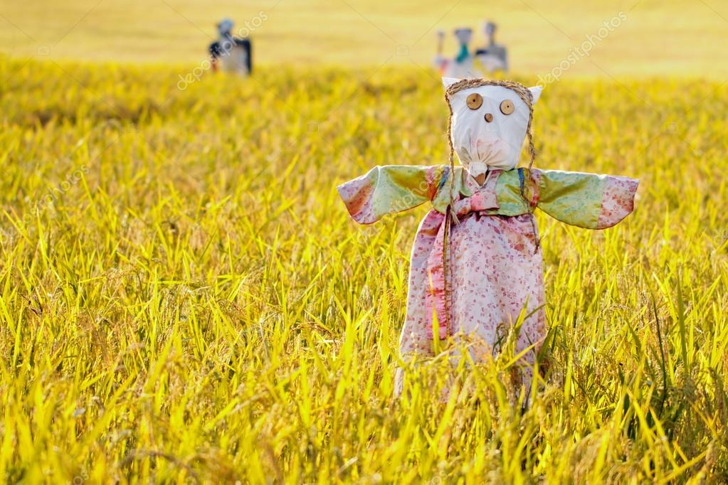 Scarecrow on the rice field