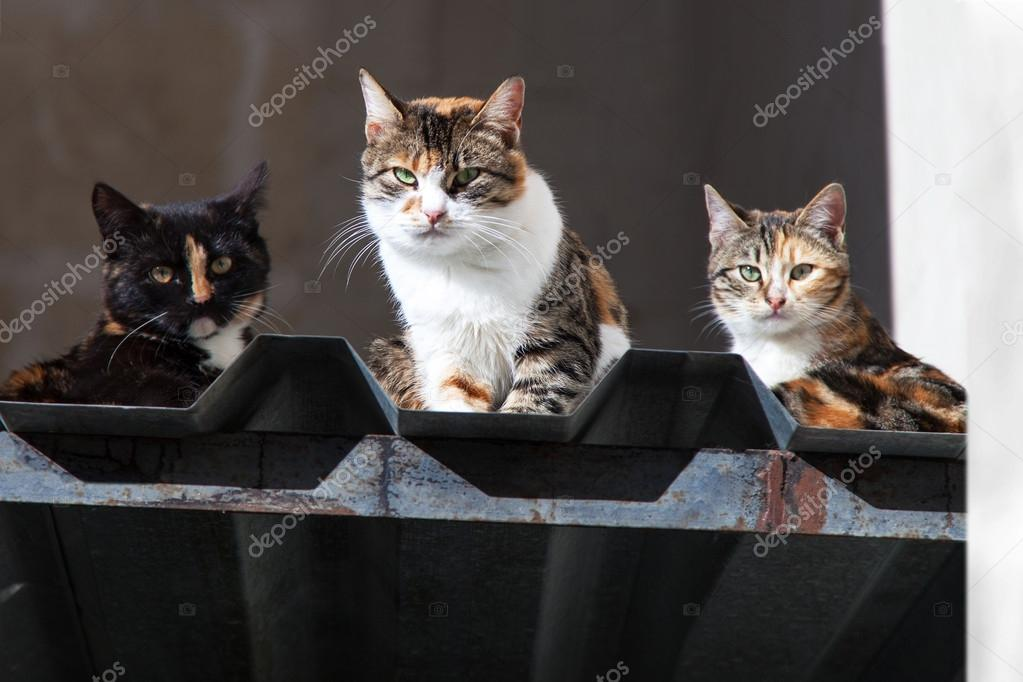 Three cats sitting on roof