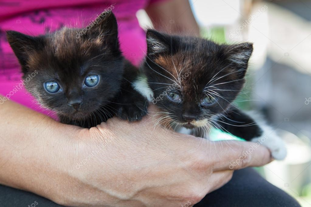 Two black kittens