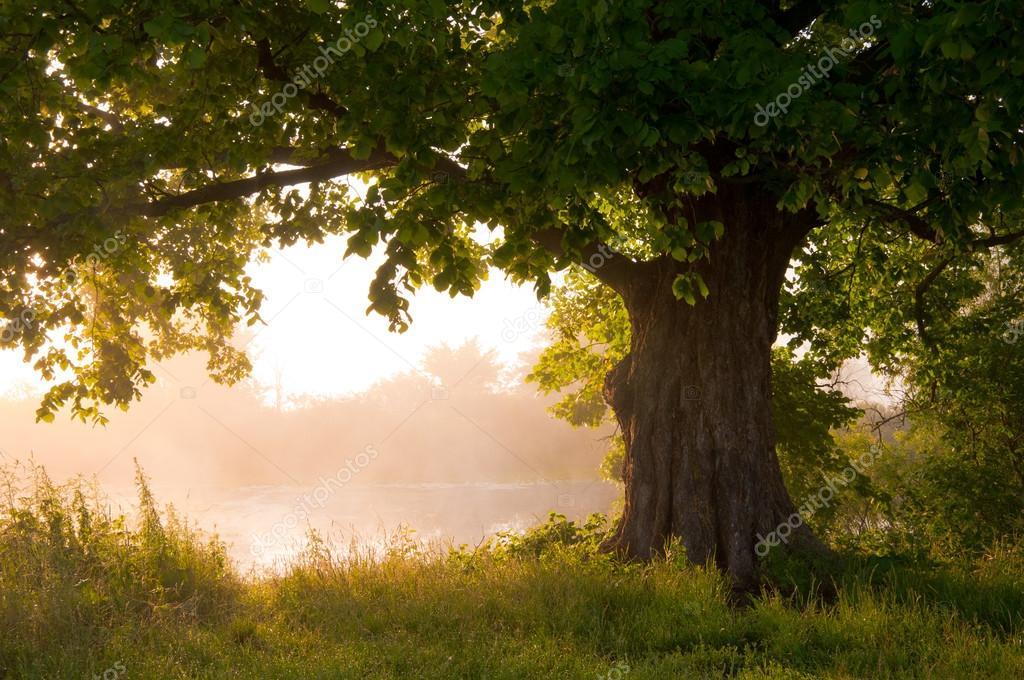 Oak tree in full leaf in summer standing alone stock vector