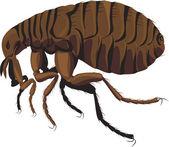 Fotografie flea - parasite