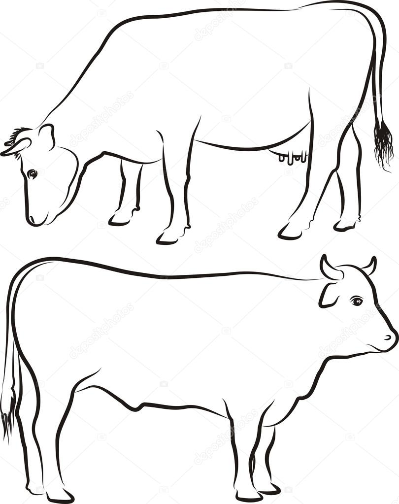 cow and bull outlines stock vector ciuciumama 41312639
