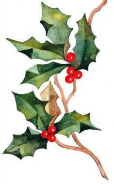 Hand drawn christmas holly