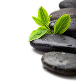 Fotografie zelené listy s wellness kameny, izolované na bílém