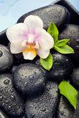 Fotografie orchidej květina, zelené listy a wellness kameny na vlhké modré poza