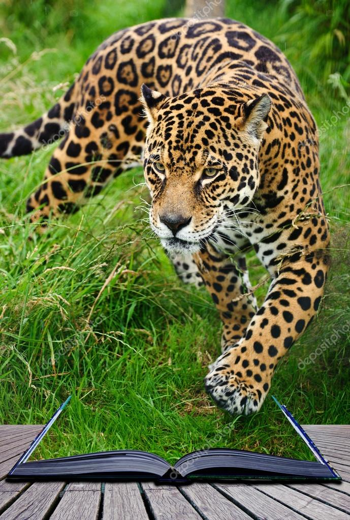 Creative concept image of jaguar in pages of book