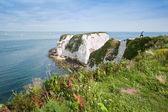 Fotografie Old Harry Rocks Jurassic Coast UNESCO Dorset England