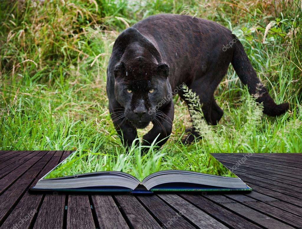 Creative concept image of black jaguar in pages of book