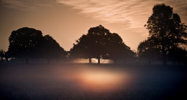 Fog glowing in bright rays of sunrise in landscape