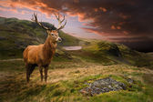 Photo Red deer stag in moody dramatic mountain sunset landscape