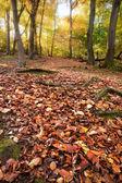zářivé podzimní podzim Lesní krajina obrázek