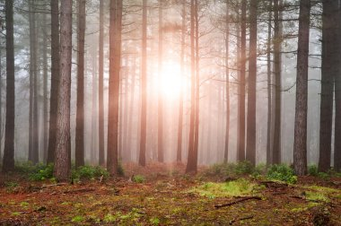 Landscape of forest with dense fog in Autumn Fall with sun burst