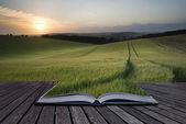 Kreativní koncept stránky knihy letní krajina obrazu pšenice f