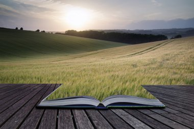 Creative concept pages of book Summer landscape image of wheat f