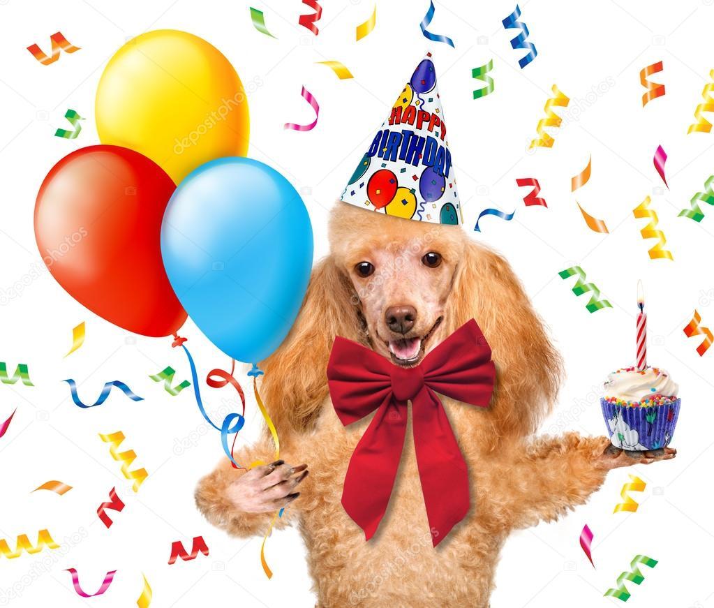 Chien Anniversaire Avec Des Ballons Et Un Petit Gâteau