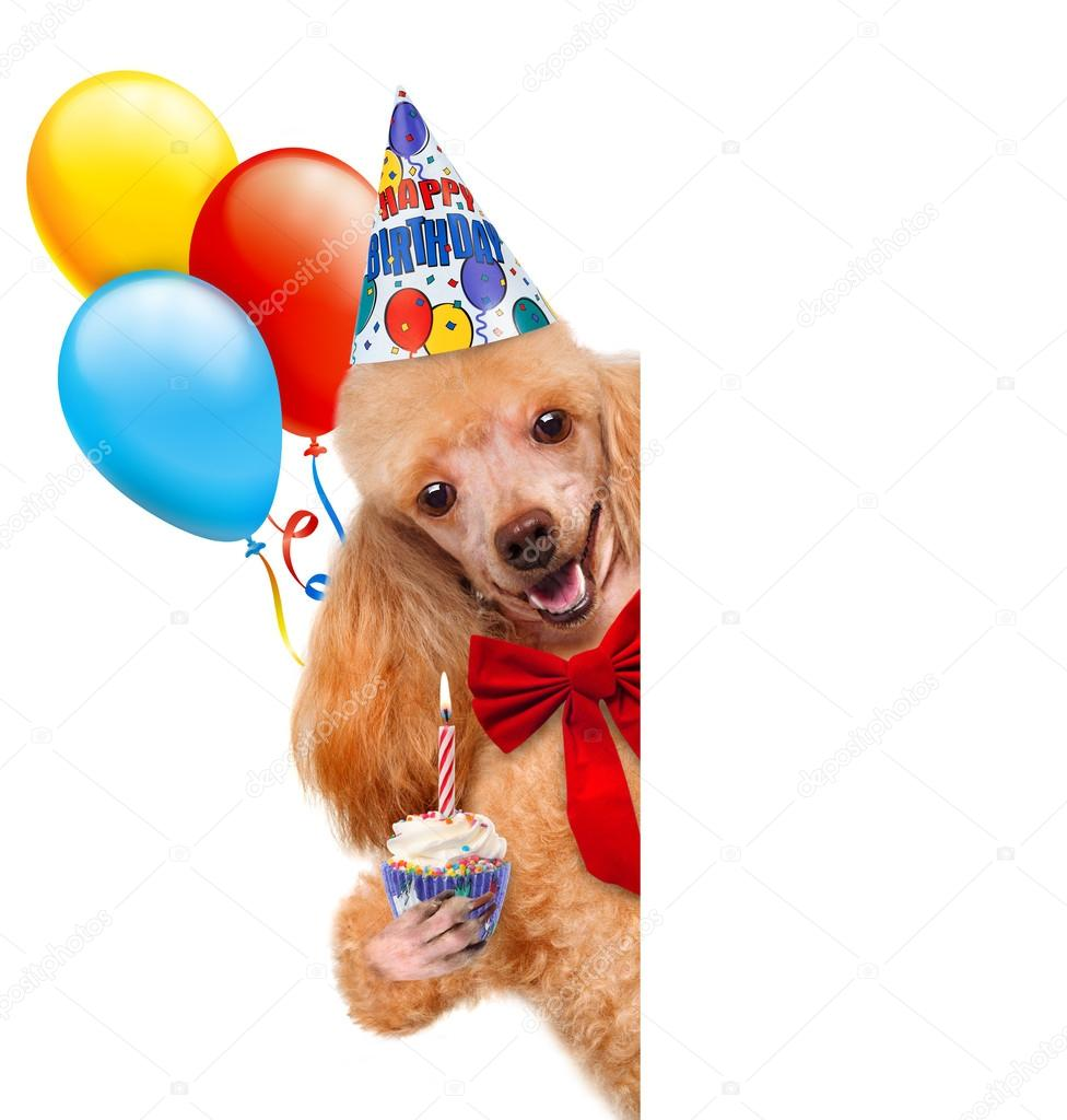 Geburtstag Hund Stockfoto C Rasulovs 43152183