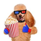 pes sledovat film