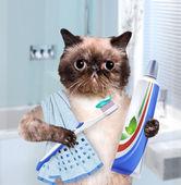 Zähneputzen Katze.