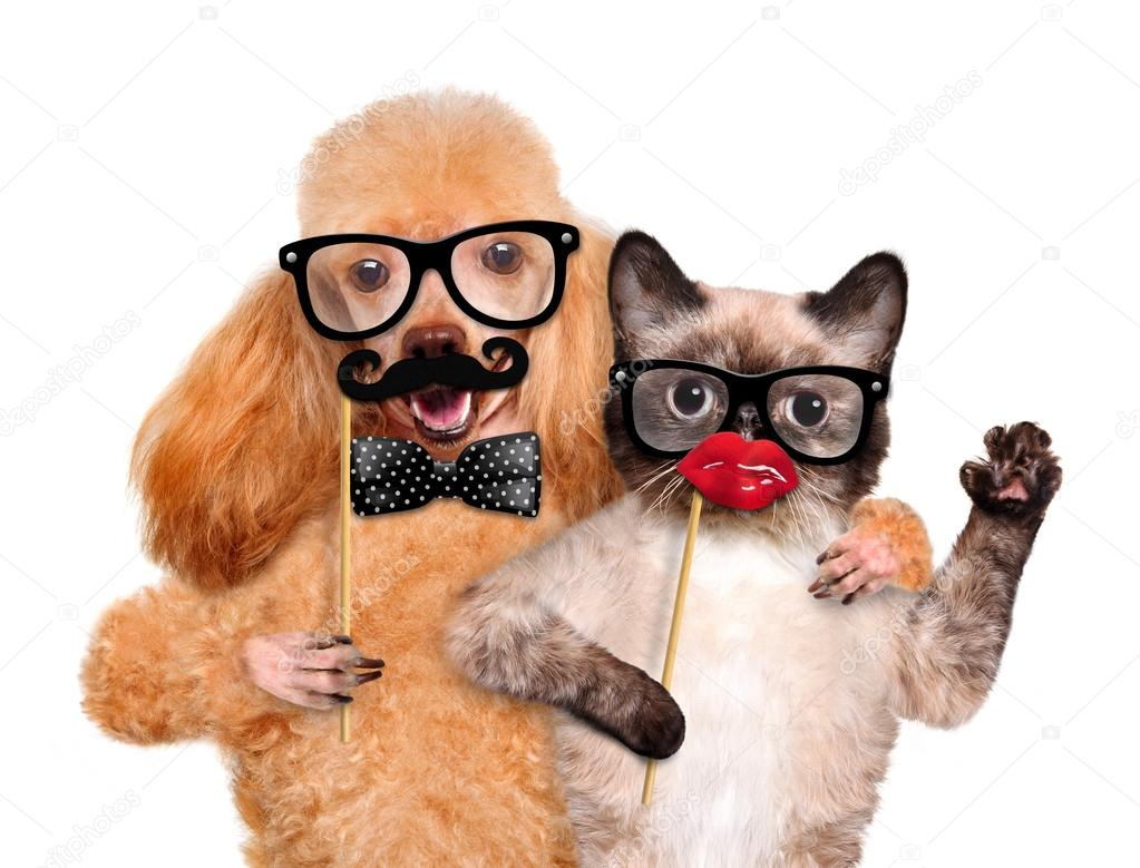 Hipster dog and cat.