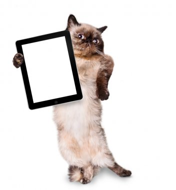 Cat holding a blank tablet