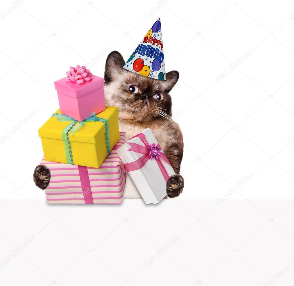 Verjaardag Kat Stockfoto C Rasulovs 49873031