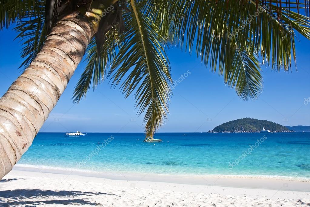 Tropical white sand beach with palm trees