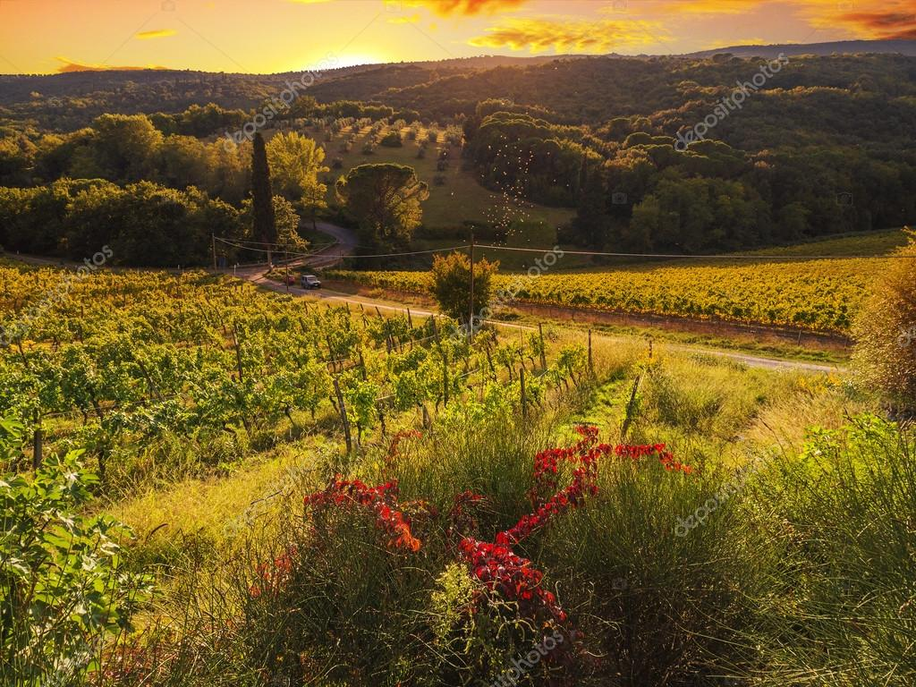 Tuscany Vineyard Stock Images, Royalty-Free Images & Vectors ...