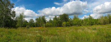 Summer landscape in the park. Panorama