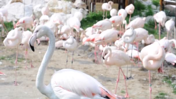 Wildtiere und bunte Vögel