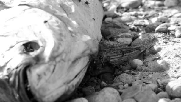 mrtvé ryby hnilobou s mouchami