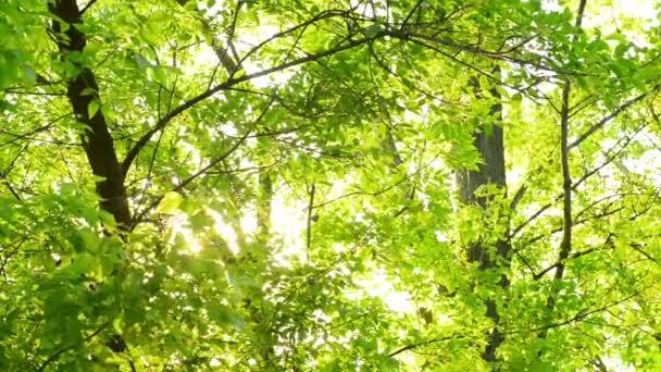 Az erdő szép nyári fények