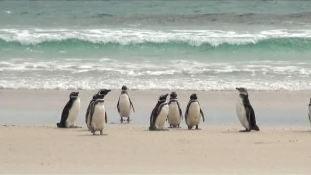 Pingvinek - Magellán és Gentoo