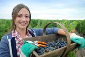 Closeup of woman in vineyard during harvest season