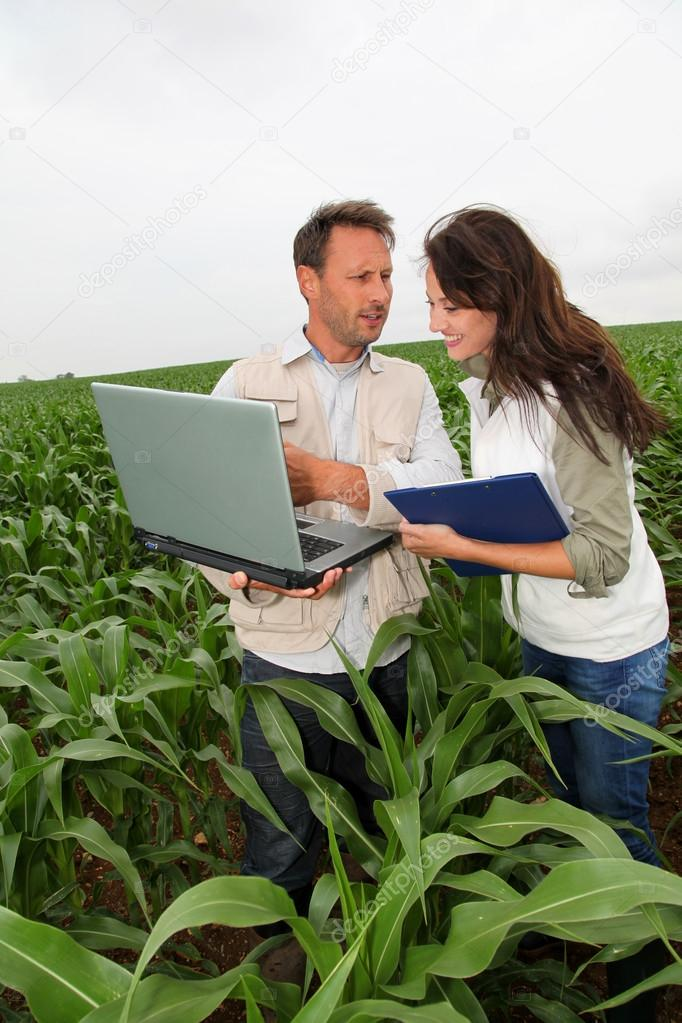 Reserachers working in corn field