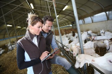 Farmers using tablet