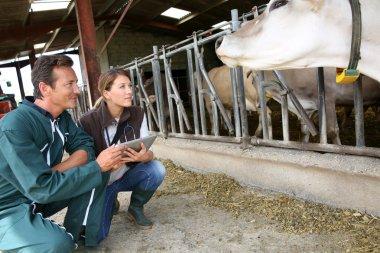 Veterinarian with breeder