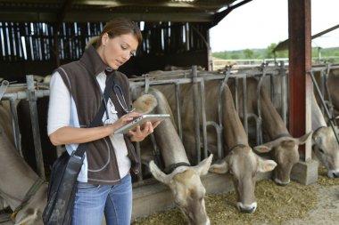 Veterinarian using tablet