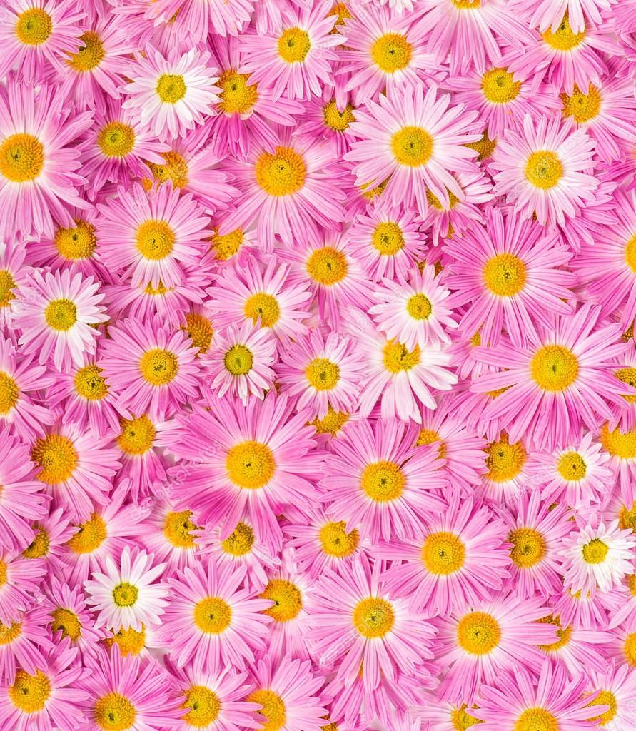 Pink And Yellow Flowers Background Stock Photo Draw05 33369695